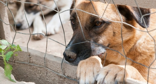 refuge chien bastia