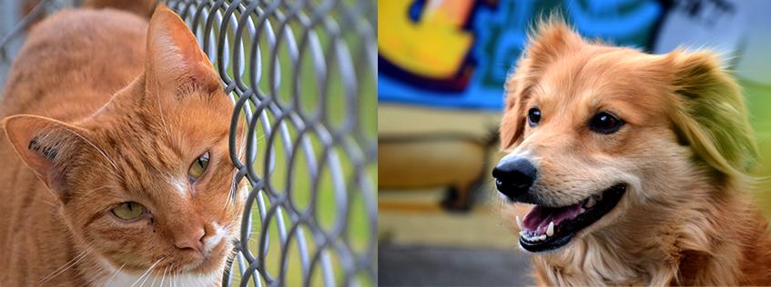 refuge chien bayonne
