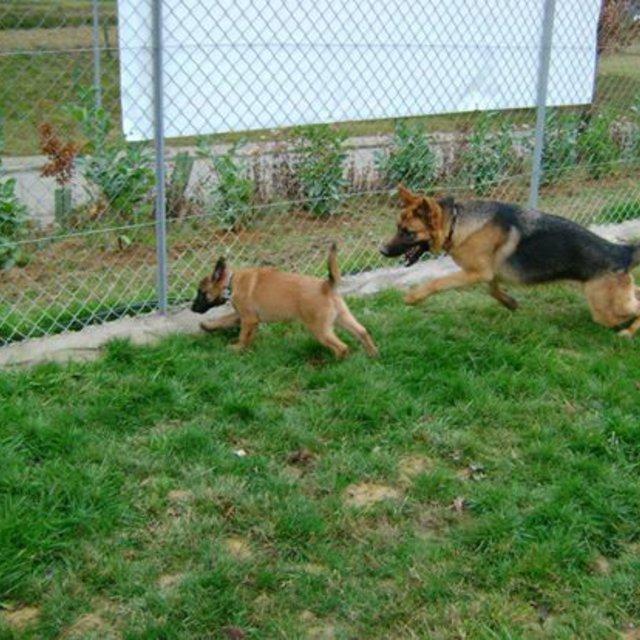 refuge chien beaurepaire