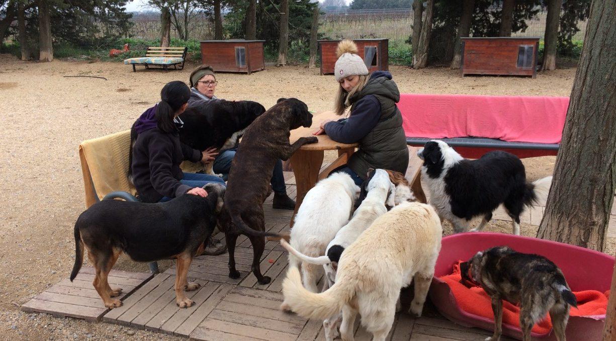 refuge chien bellegarde
