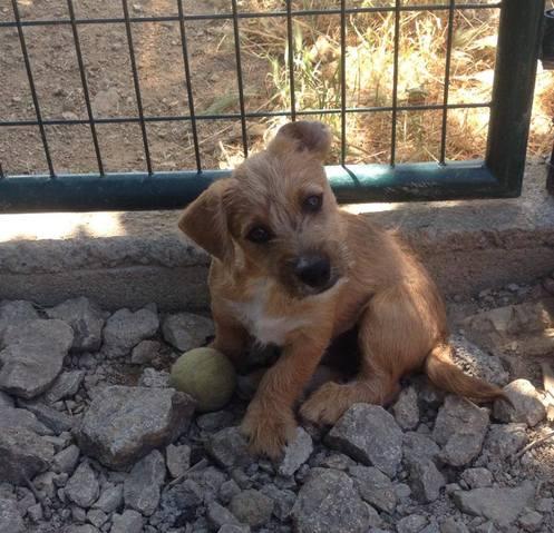 refuge chien bouches du rhone