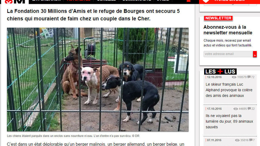 refuge chien bourges