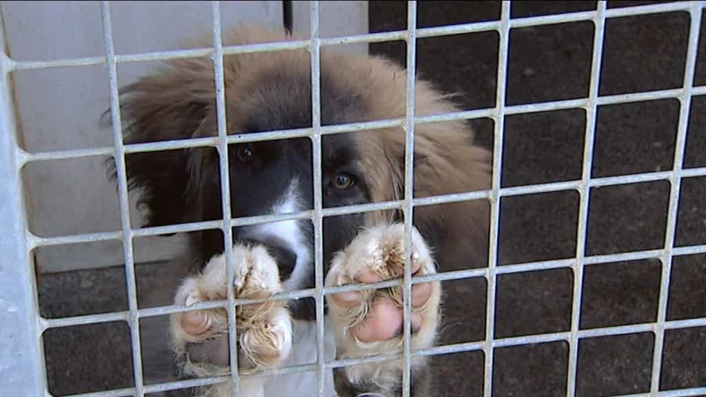 refuge chien bourgogne