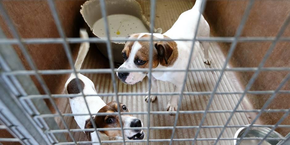 refuge chien bruxelles