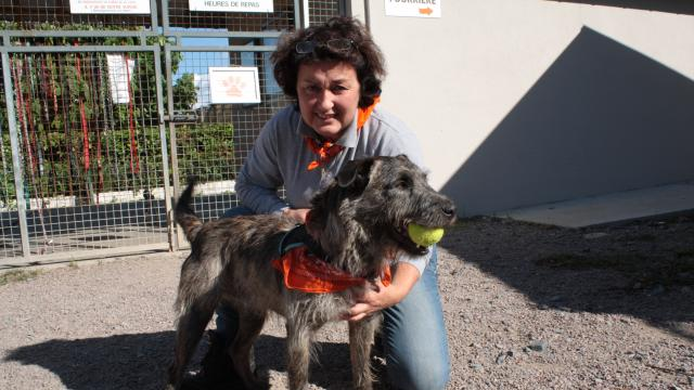 refuge chien cabourg
