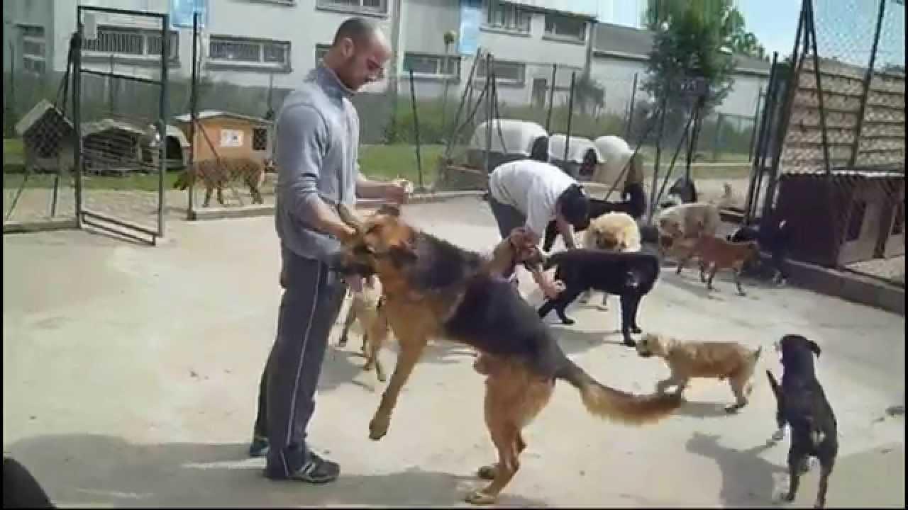 refuge chien calvados