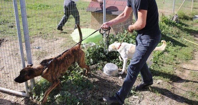 refuge chien carcassonne