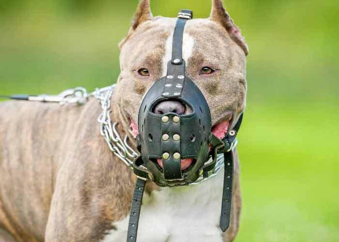 refuge chien categorie 1
