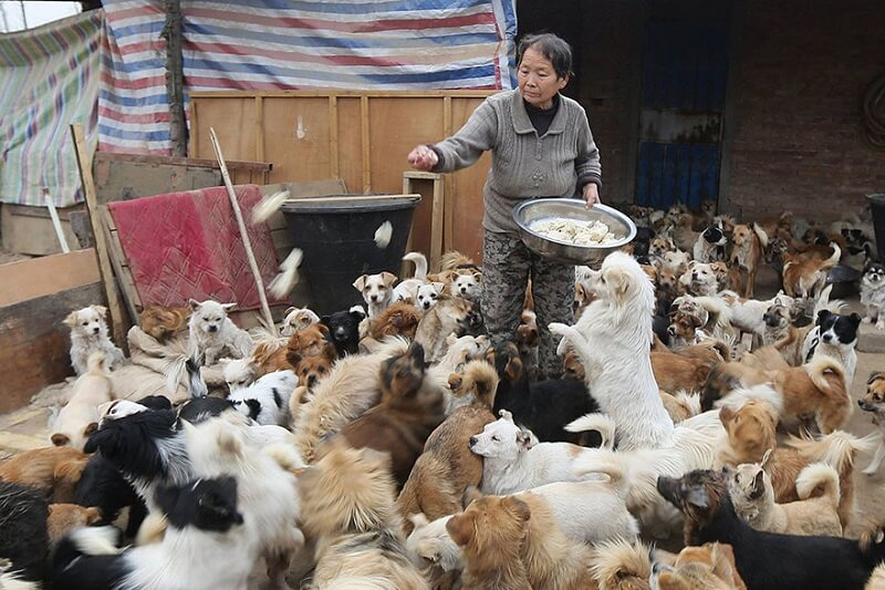 refuge chien chinois