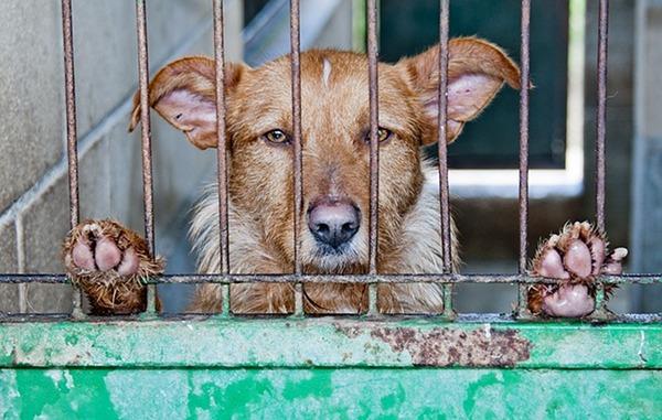 refuge chien clermont ferrand