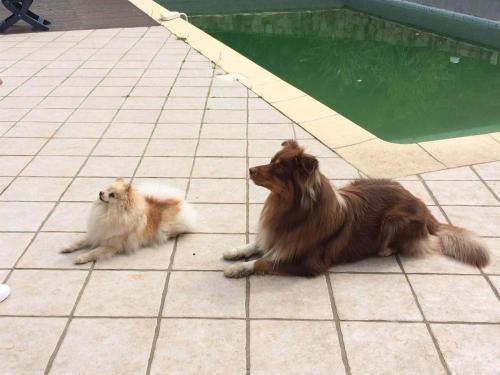 refuge chien cognac