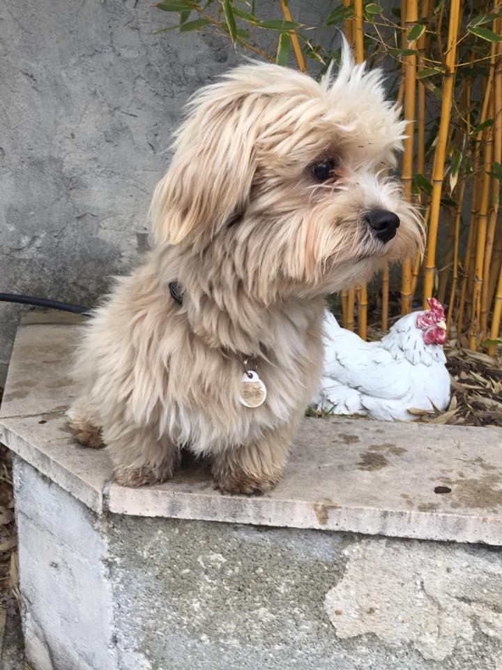 refuge chien cucuron