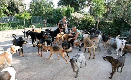 refuge chien dans le var