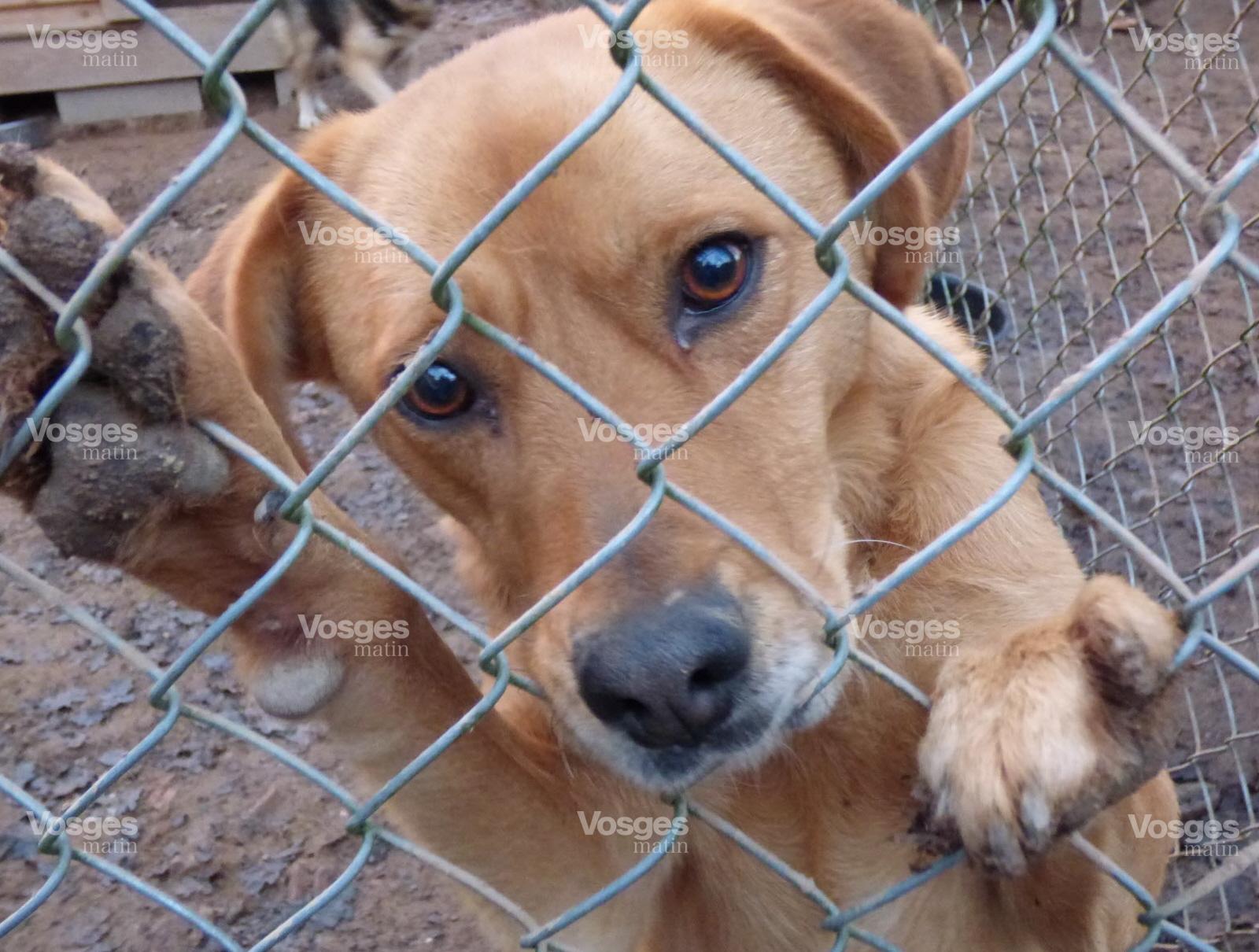 refuge chien dans les vosges
