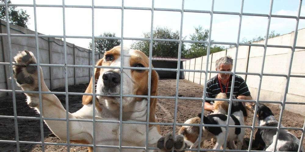 refuge chien dax