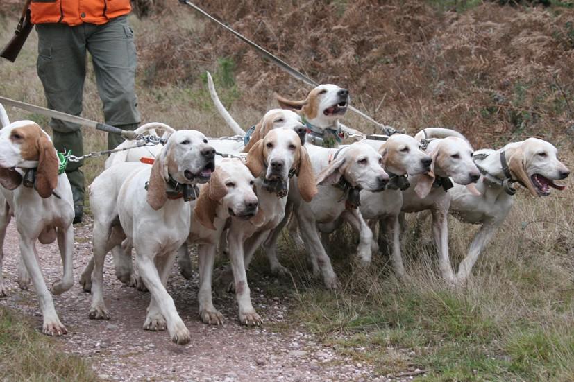 refuge chien de chasse
