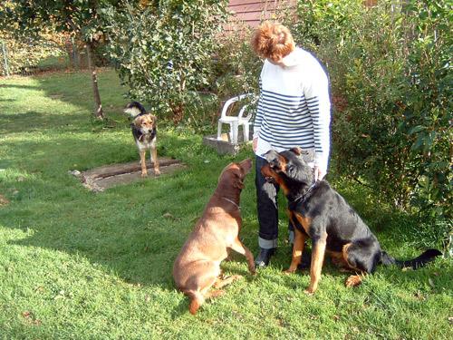 refuge chien doubs