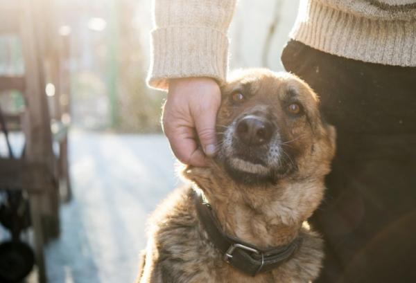 refuge chien embrun 05200