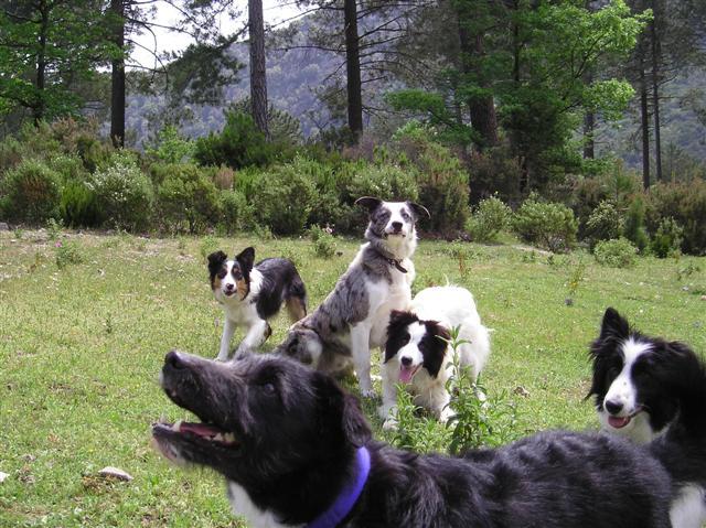refuge chien en corse