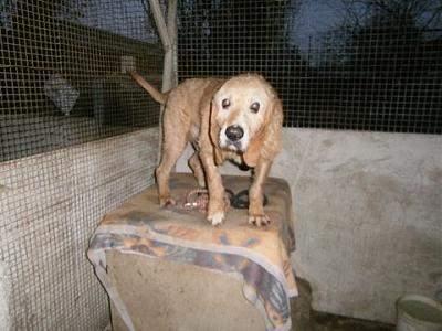 refuge chien en gironde