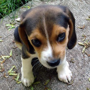 refuge chien en suisse