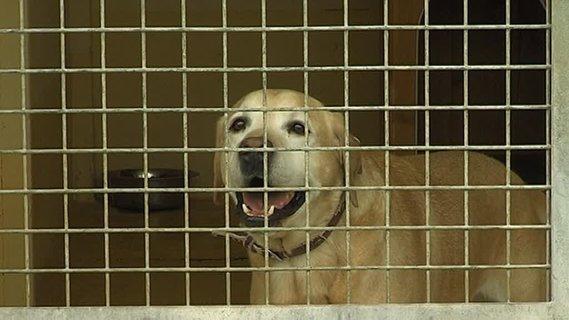 refuge chien epernay