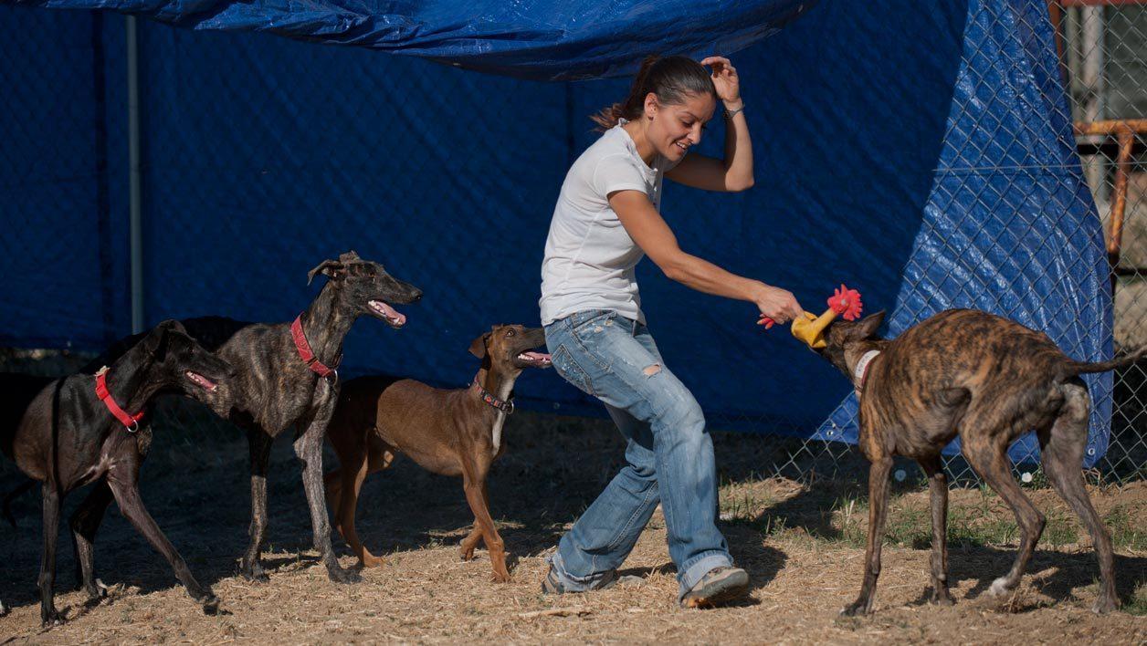 refuge chien espagne