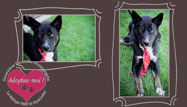 refuge chien faculte medecine st-hyacinthe