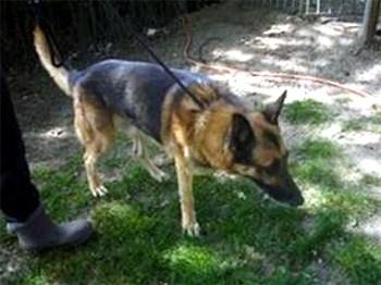 refuge chien feluy