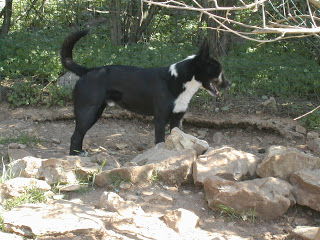 refuge chien flassans