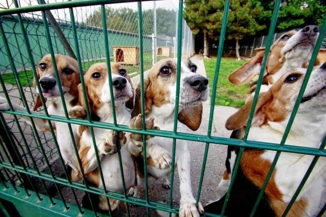 refuge chien france voisine