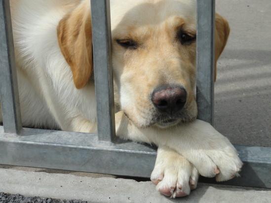refuge chien frasnoy