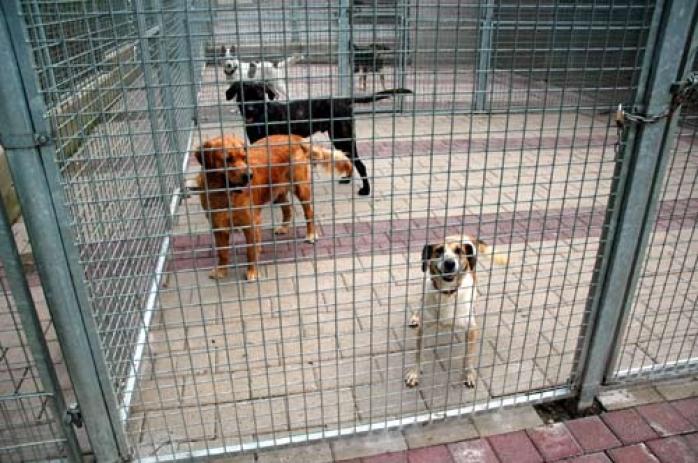 refuge chien gasperich