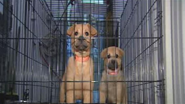 refuge chien gatineau