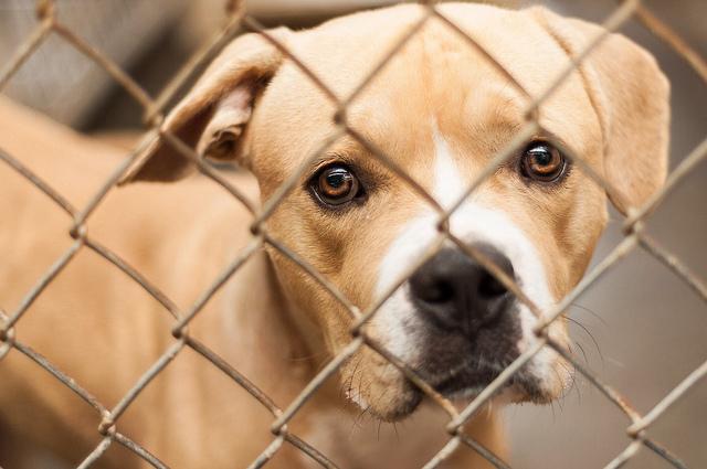 refuge chien gratuit