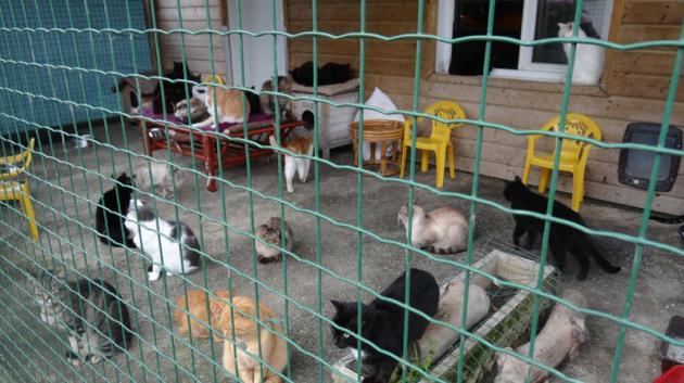 refuge chien guerande