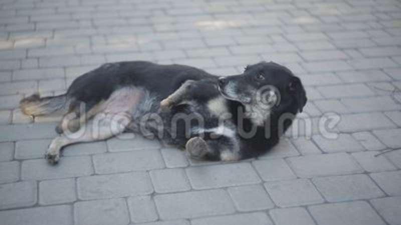 refuge chien handicape
