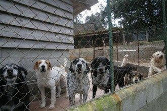 refuge chien haute corse