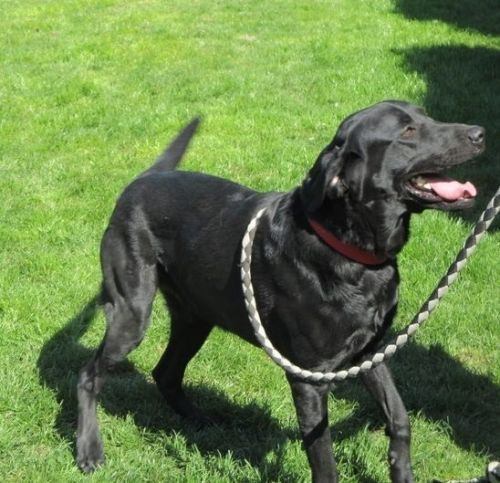 refuge chien haute normandie
