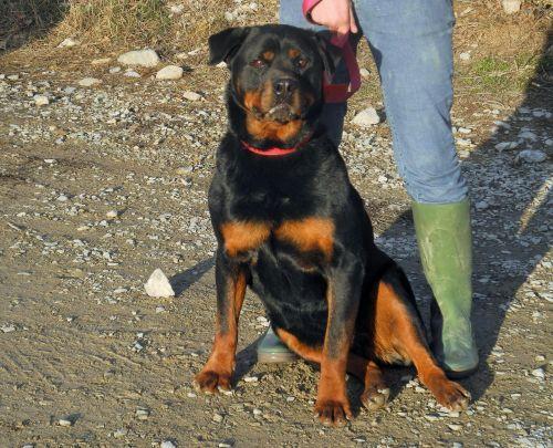 refuge chien hautes alpes