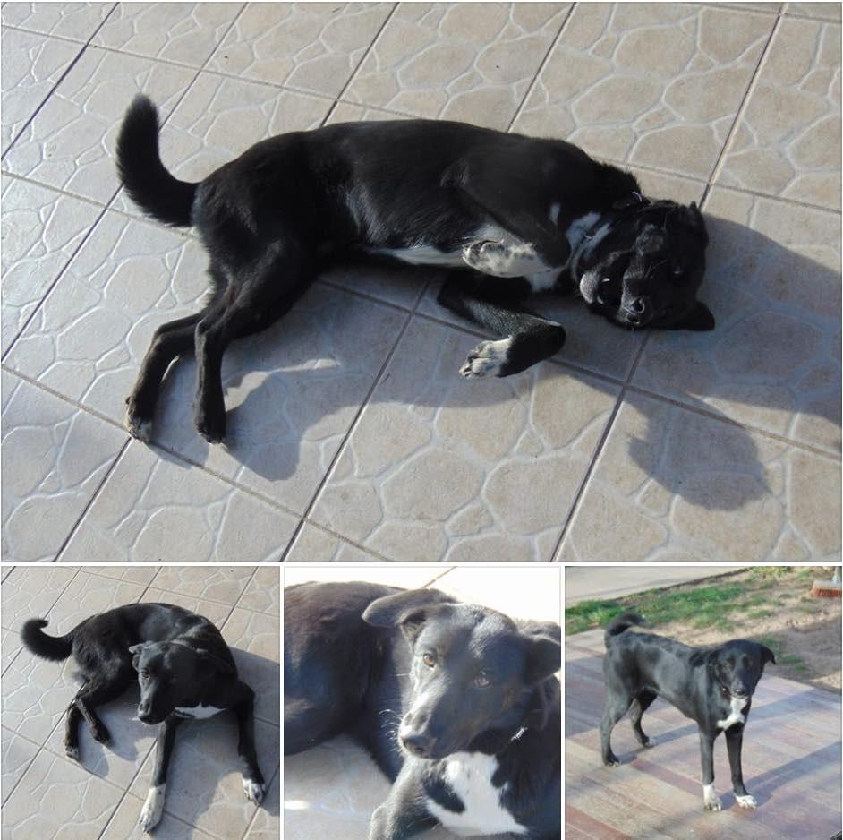 refuge chien herault