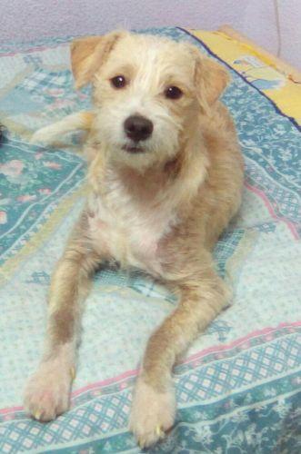 refuge chien idf