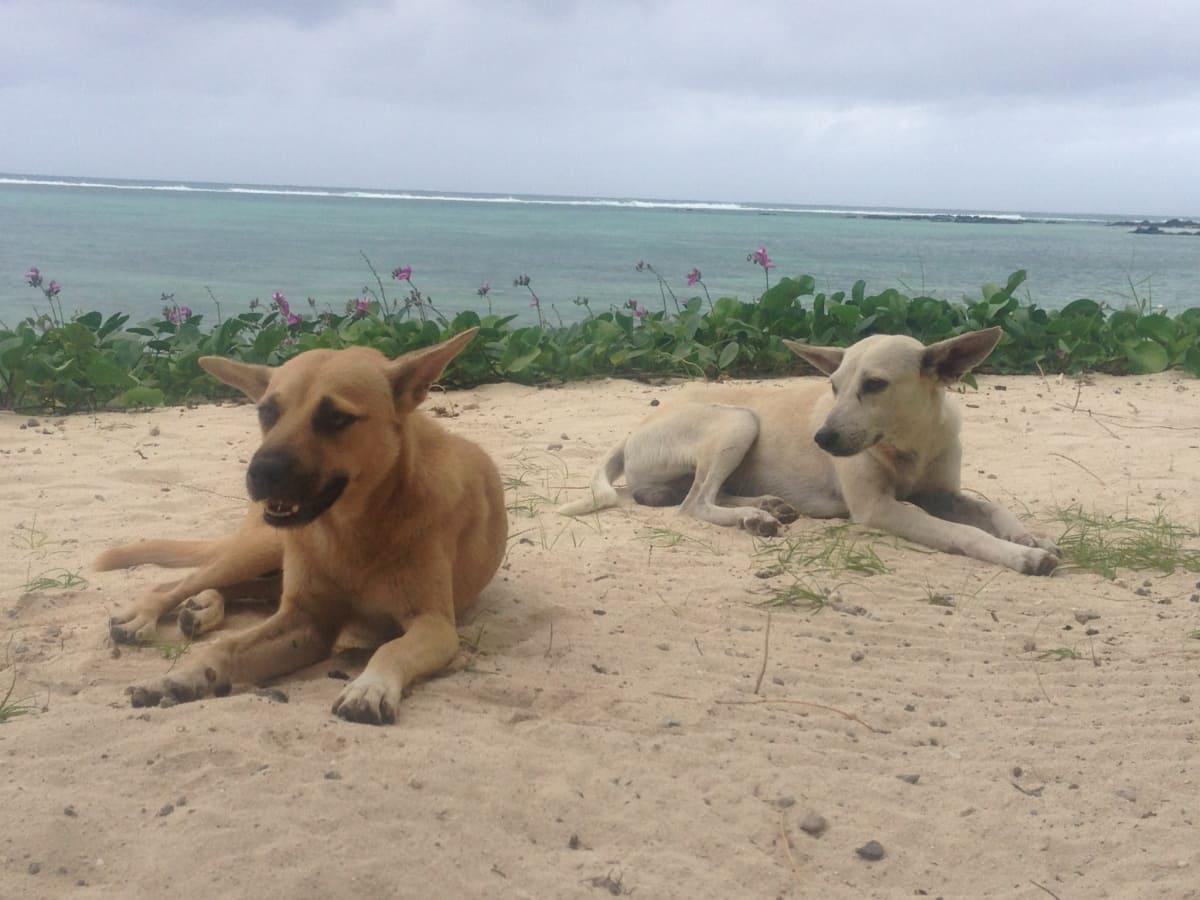 refuge chien ile maurice