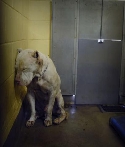 refuge chien ile perrot