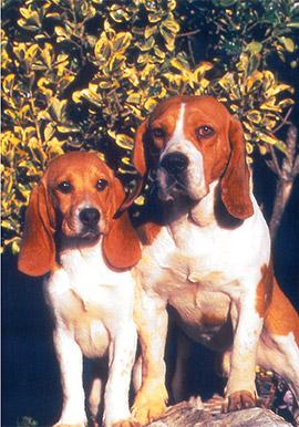 refuge chien indre et loire