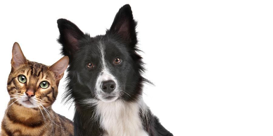 refuge chien joliette