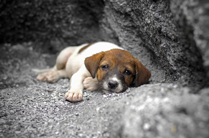 refuge chien la rochelle