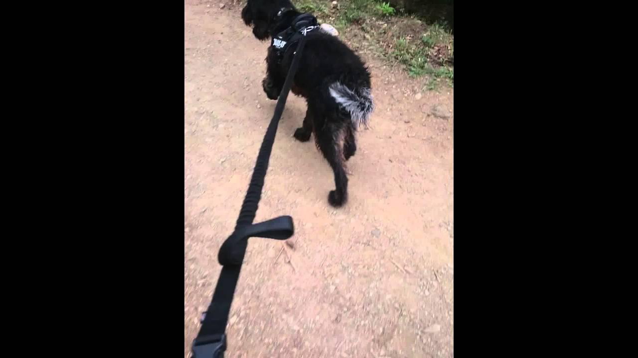 refuge chien lagoubran toulon