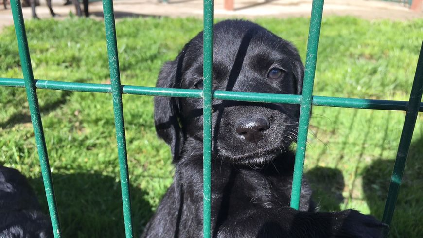 refuge chien limoges