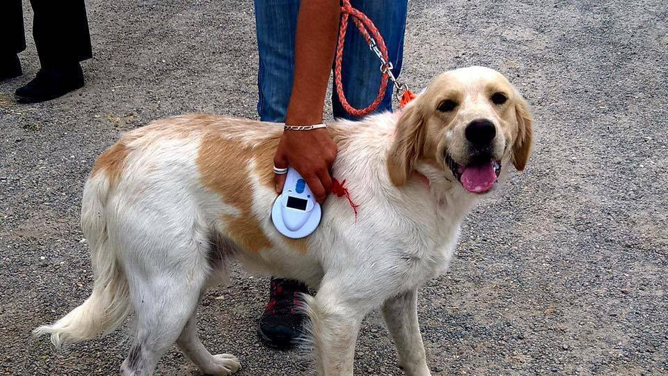 refuge chien loire